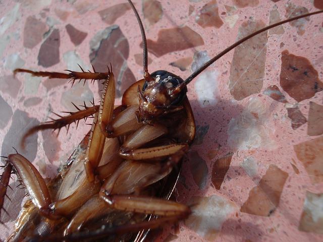 šváb na zádech