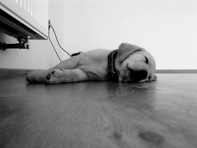 pes ležící na zemi