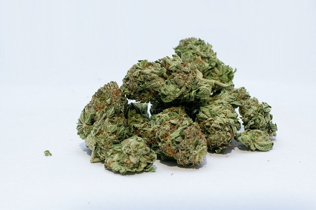 šišky marihuany